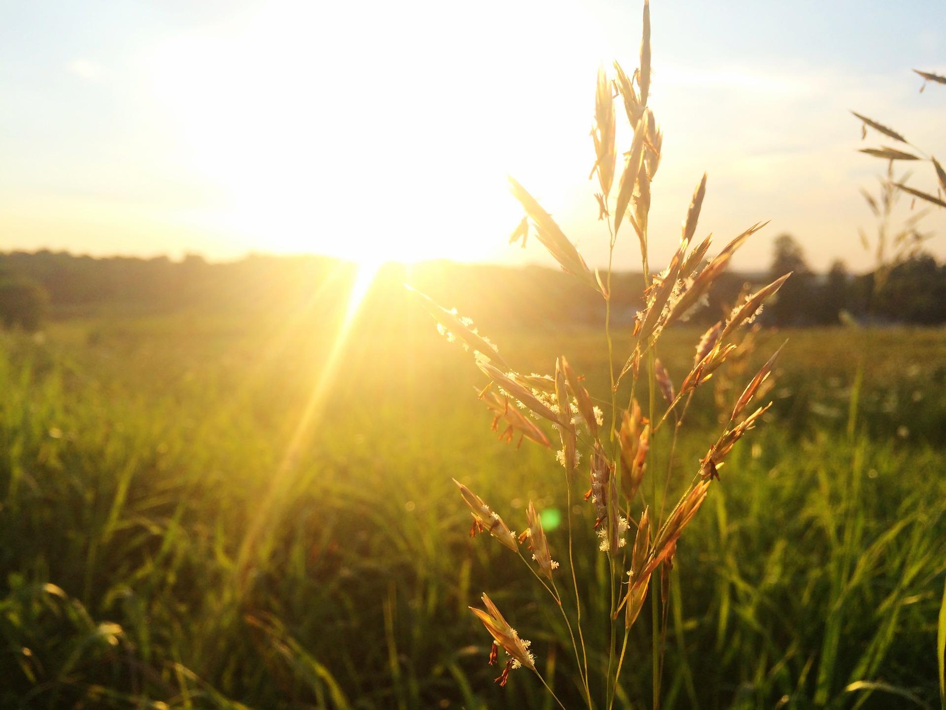 grass-828909_1920