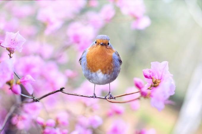 beautiful-bird-bloom-blossom-414181