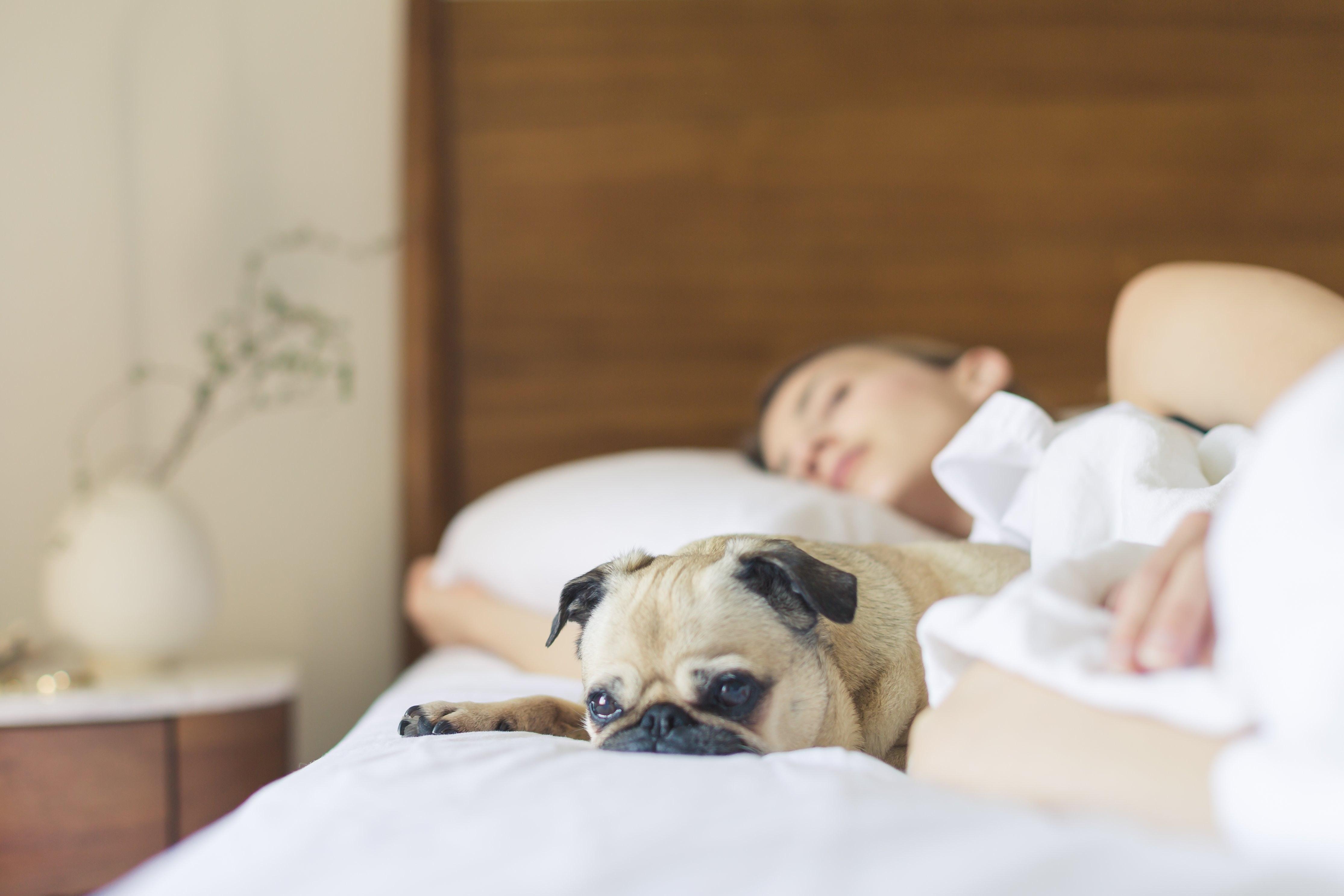importance-of-employee-sleep