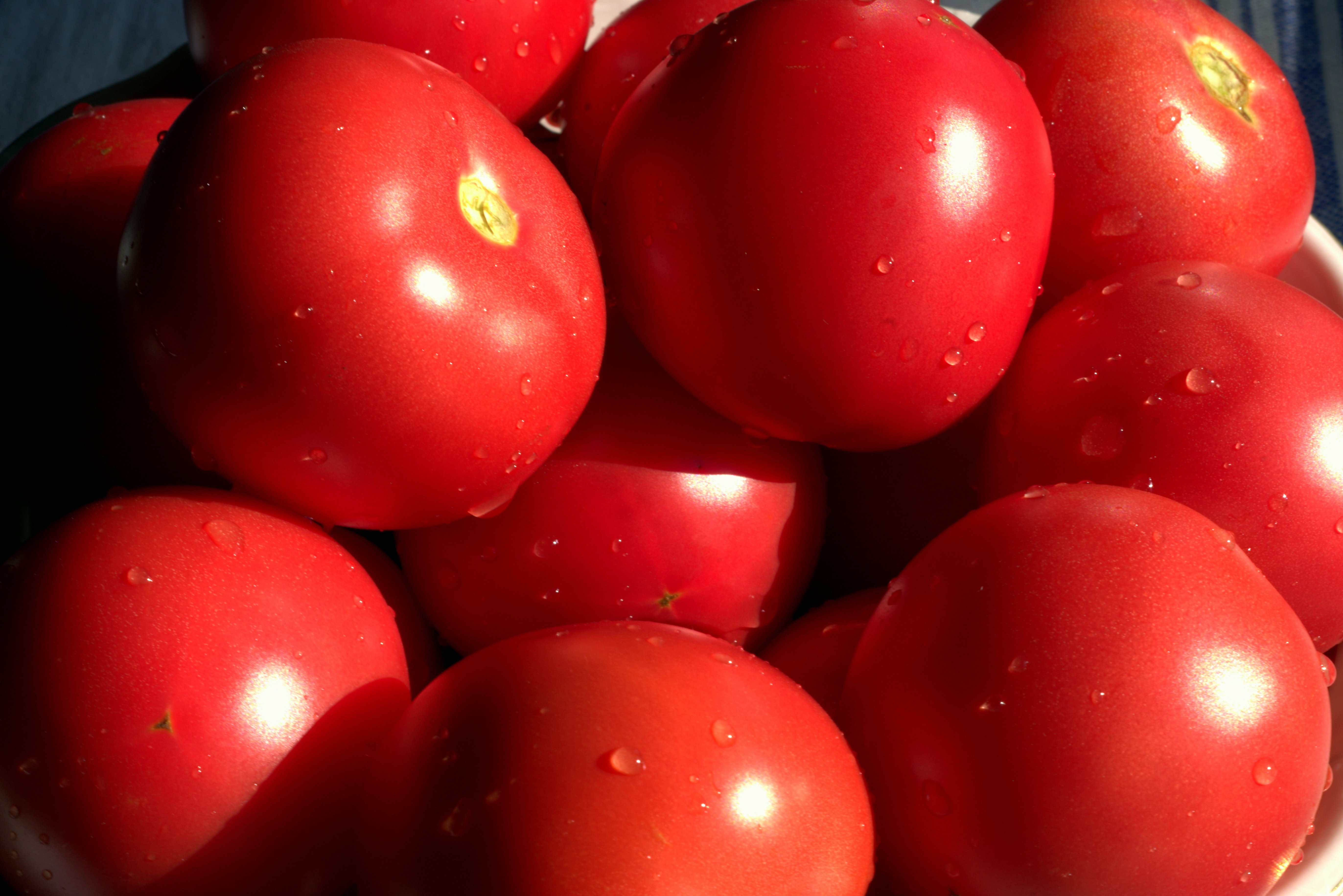 sun-safety-tomatoes